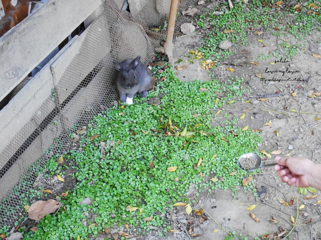 新北八里TO House兔子庭園餐廳親子餐廳推薦遊樂設施兔子園 (4)