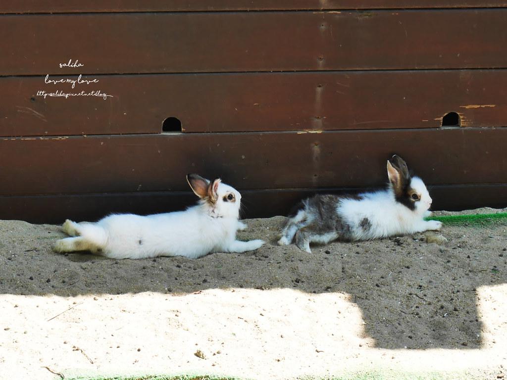 新北八里一日遊景點推薦十三行博物館附近TO House兔子庭園餐廳 (2)