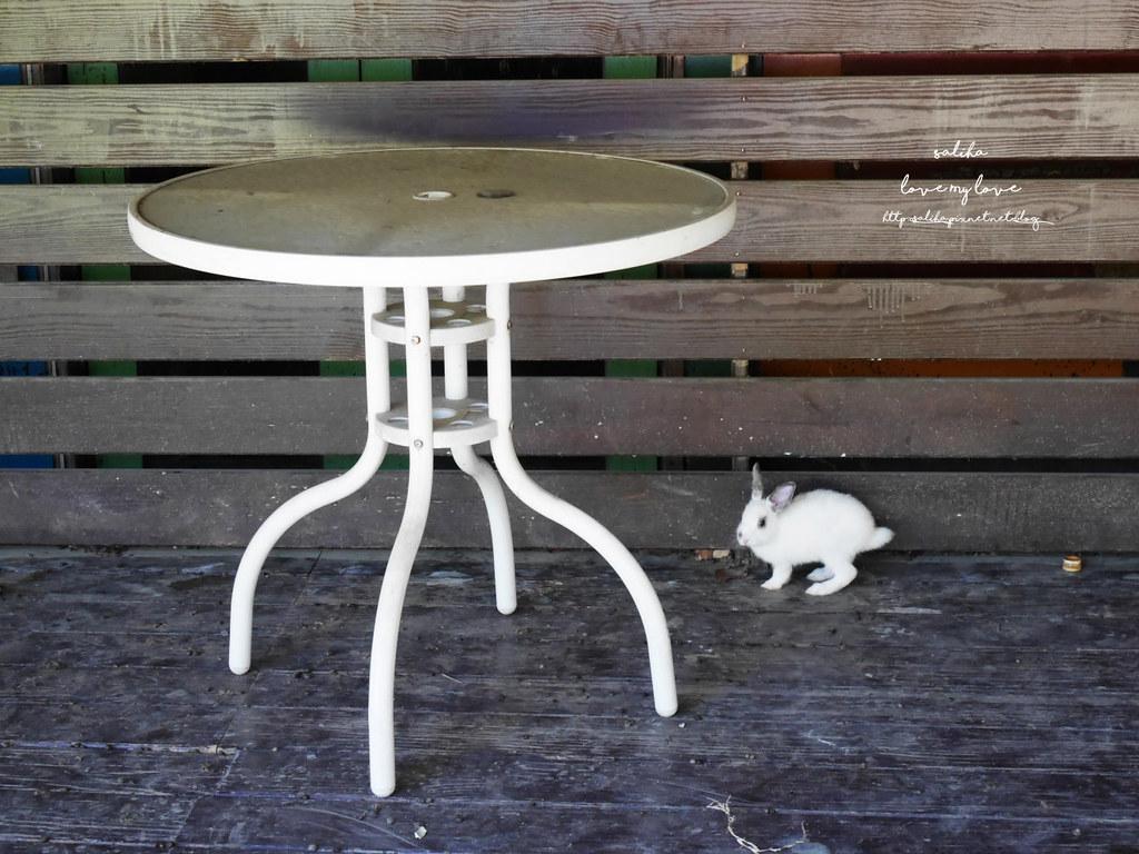 新北八里一日遊景點行程推薦TO House兔子庭園餐廳咖啡廳 (7)
