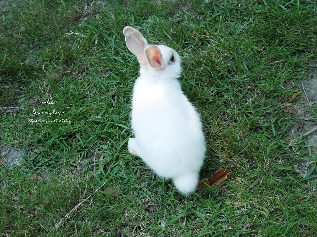 新北八里TO House兔子庭園餐廳親子兒童小朋友玩樂推薦行程 (3)