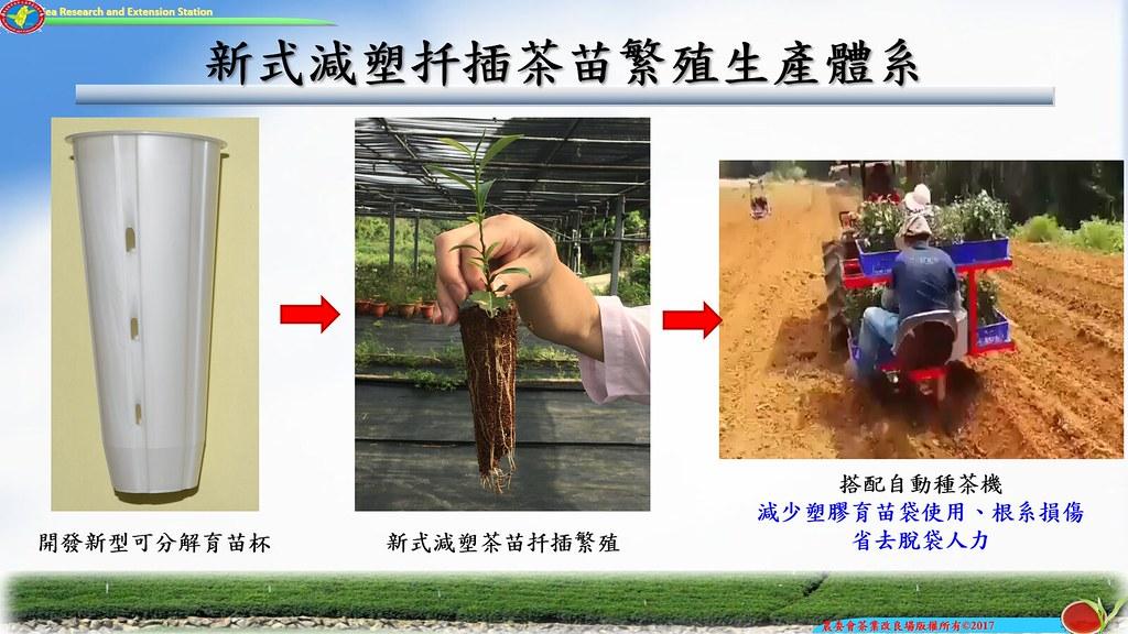新式減塑扦插茶苗繁殖生產體系示意圖。茶改場提供