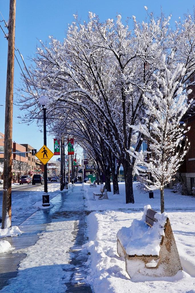Snowy canopy, Calgary, Alberta, Canada