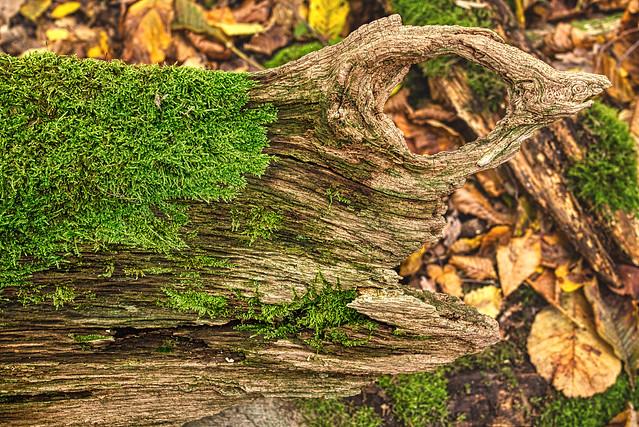 Holz-Monster