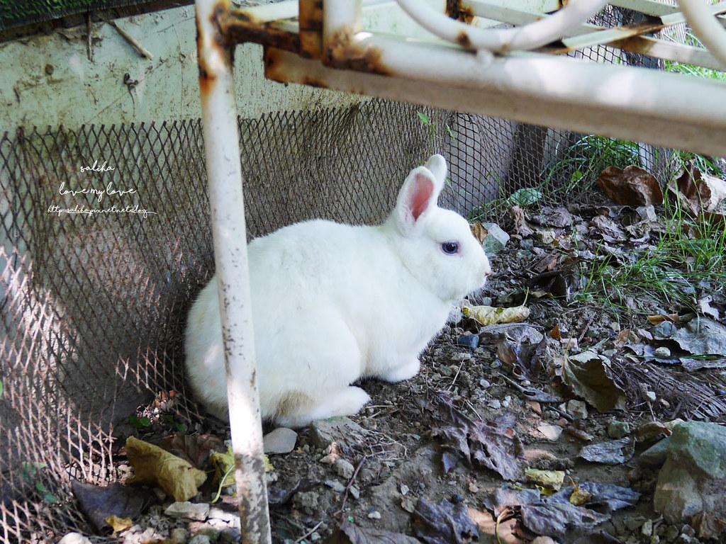 新北八里一日遊景點推薦十三行博物館附近TO House兔子庭園餐廳 (5)