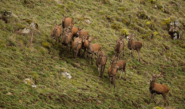 Reste Groupir !!!!! Non ce ne sont pas des moutons !!!!!