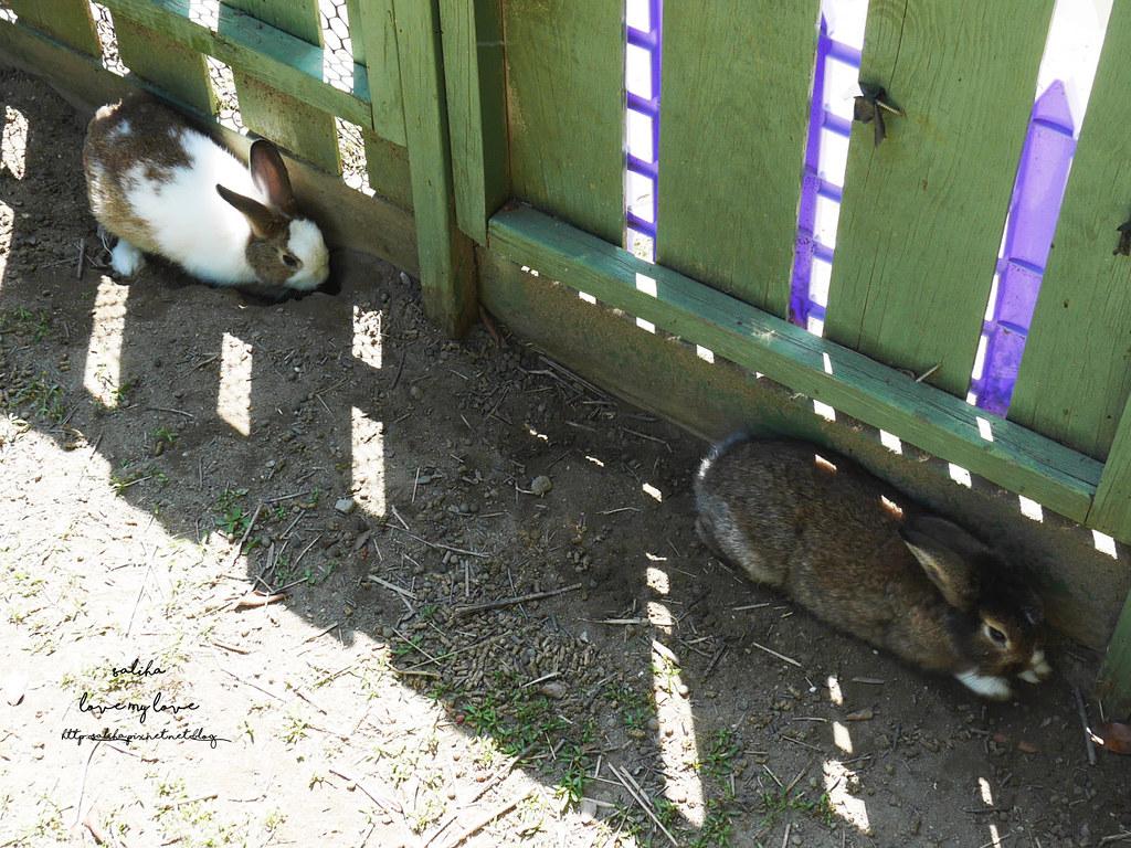 新北八里一日遊景點行程推薦TO House兔子庭園餐廳咖啡廳 (10)