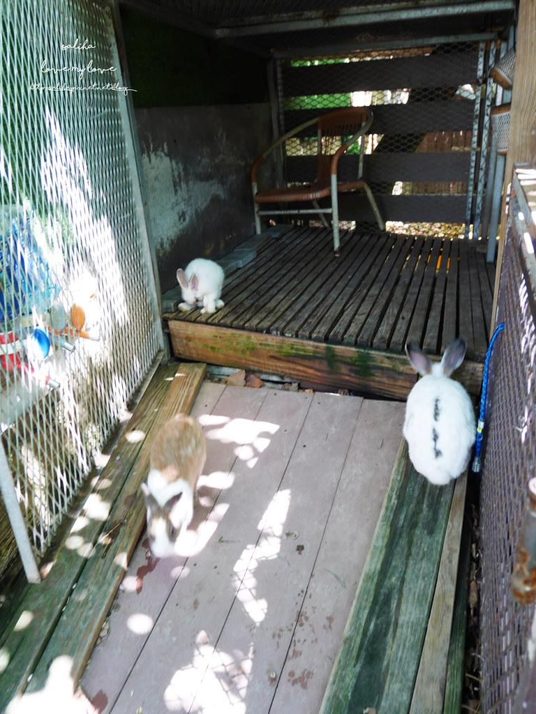 新北八里一日遊景點推薦十三行博物館附近TO House兔子庭園餐廳 (1)