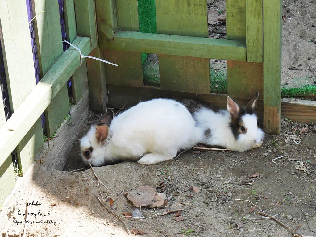 新北八里一日遊景點行程推薦TO House兔子庭園餐廳咖啡廳 (9)