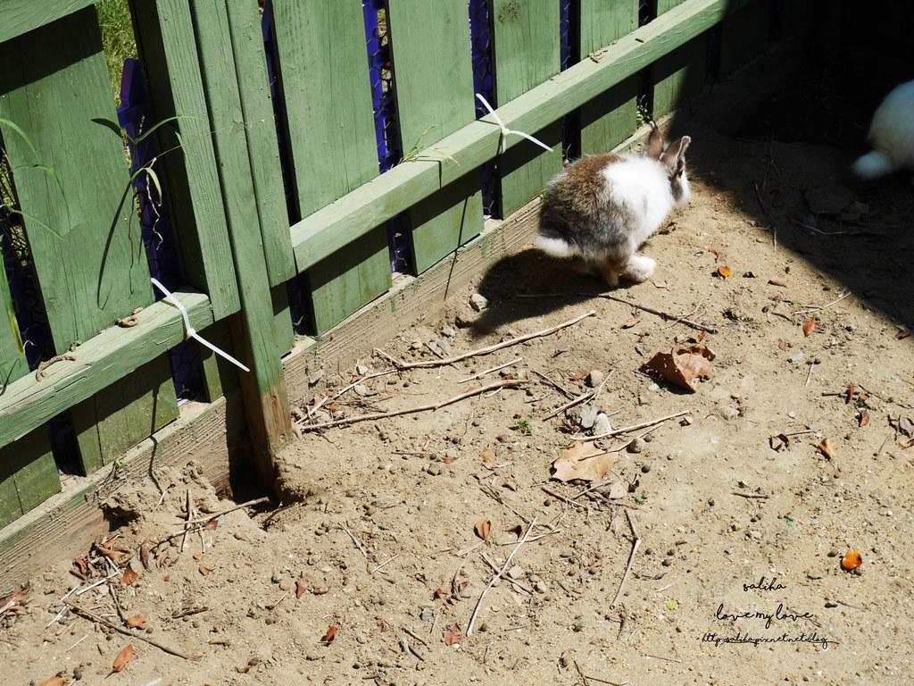 新北八里一日遊景點行程推薦TO House兔子庭園餐廳咖啡廳 (8)