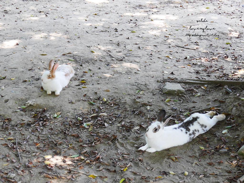 新北八里一日遊景點行程推薦TO House兔子庭園餐廳咖啡廳 (2)