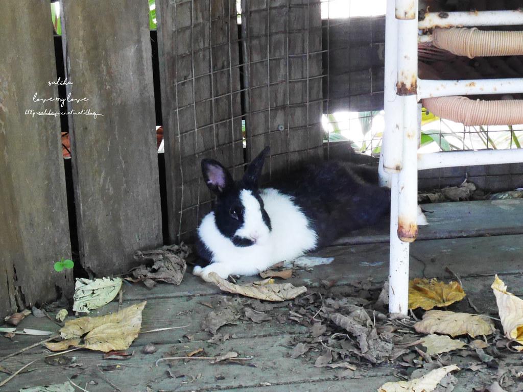 新北八里TO House兔子庭園餐廳親子餐廳推薦遊樂設施兔子園 (3)