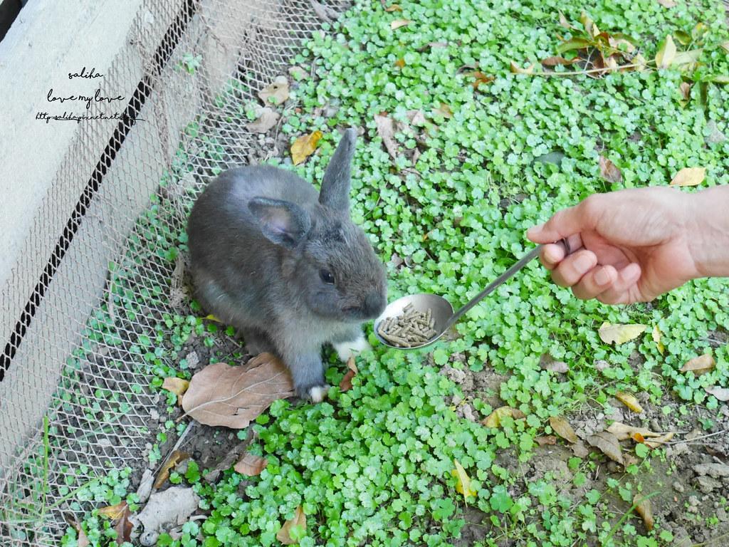 新北八里TO House兔子庭園餐廳親子餐廳推薦遊樂設施兔子園 (1)