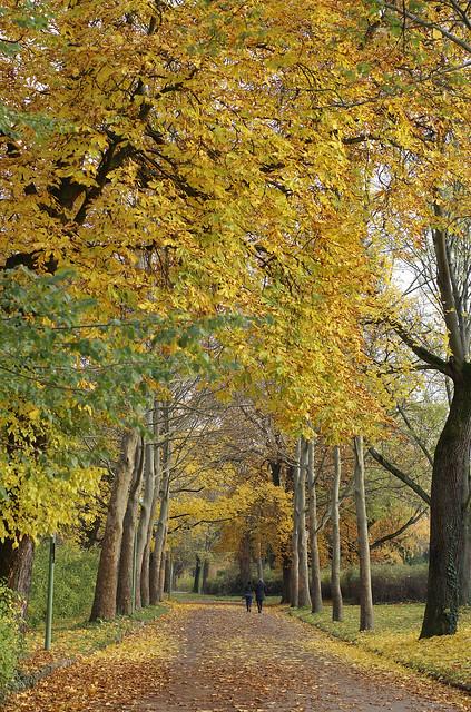 Mainz, Drususwall im Herbst (autumn)