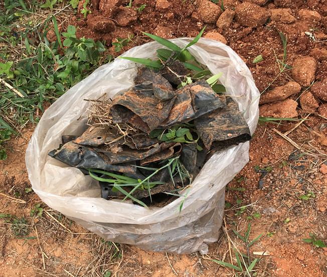 傳統塑膠育苗袋會產生許多塑膠垃圾。茶改場提供