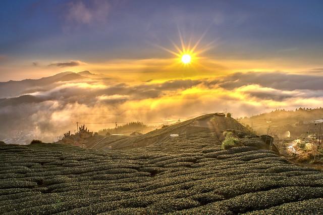 頂石槕茶園
