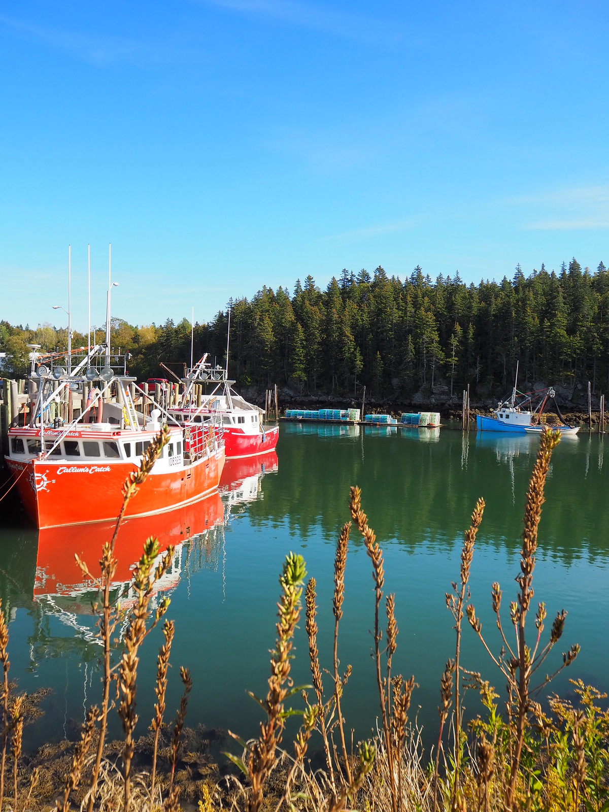 Campobello Island guide what to do