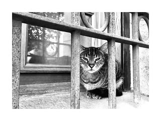 L'chat pitre