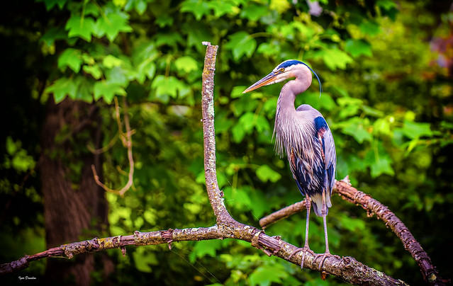One Angry Bird.