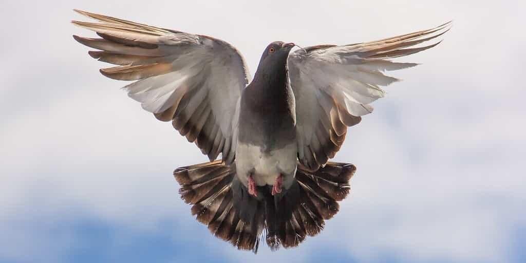 Des os de chien pour réparer les ailes brisées des oiseaux