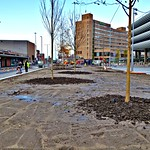 New trees at Preston Bus Station