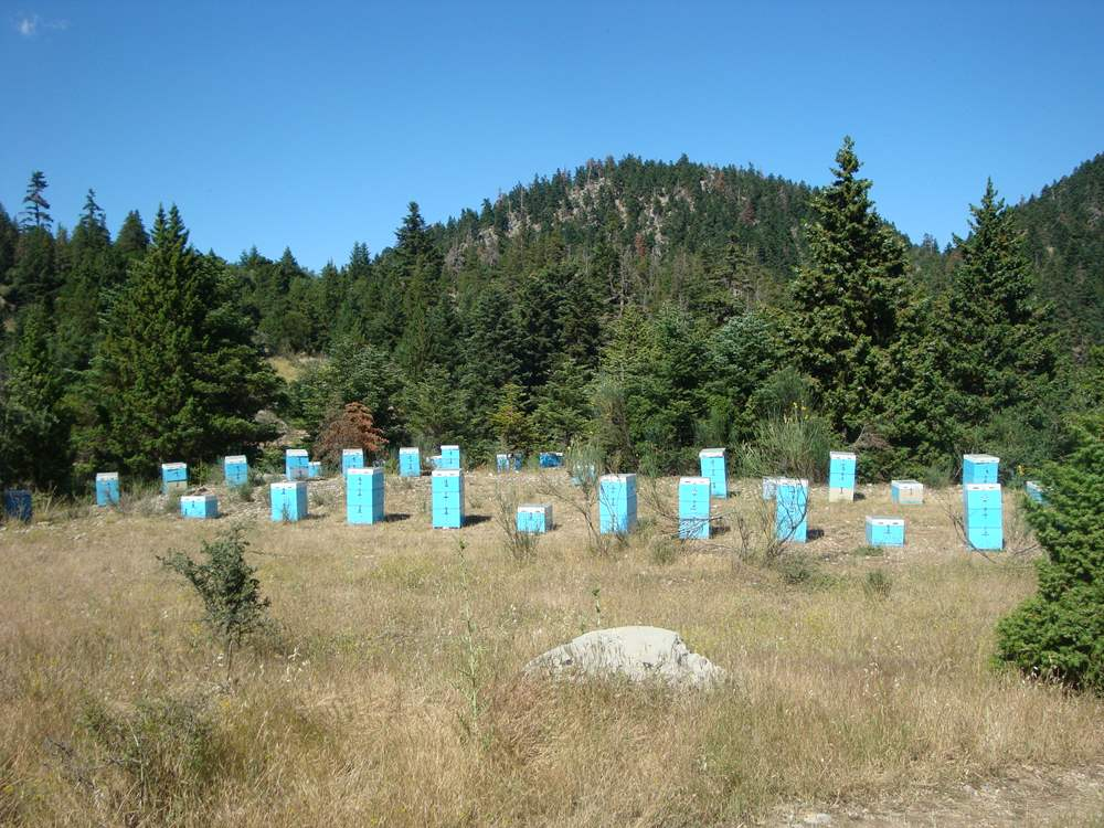 Μελισσοκoμείο στον Πάρνωνα