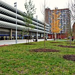 New trees planted at Preston Bus Station