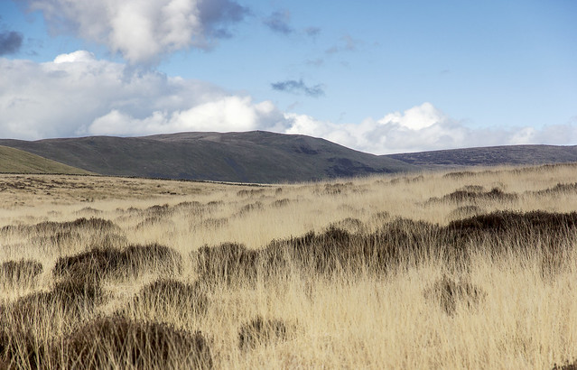 Moorland grass, Casterton Fell, Yorkshire Dales National Park, Cumbria, UK