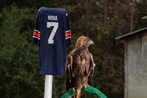 Golden eagle Nova in front of a No. 7 jersey.