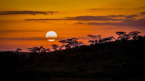 sunset samburu kenya africa orange trees silhouette colour sky samburureserveinvite