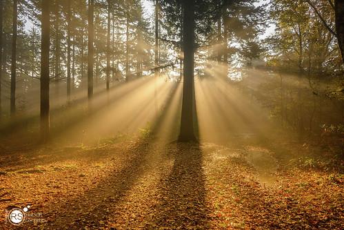 bos mist z50 nikon forest wood woods tree trees sun sunrise sunburst nature naturalforces landscape landscapes landscapephotography autumn fall season seasons dreamscape outdoor