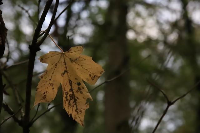 La feuille d'automne...
