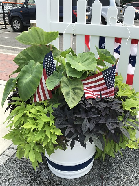 Flower planter by walkway w Flags IMG_0039 - JU