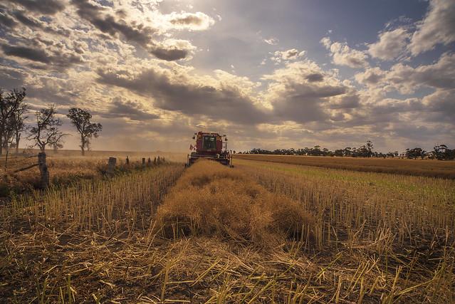 Canola harvest done