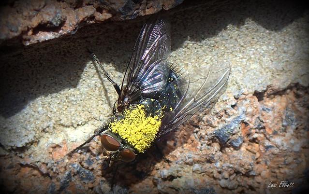 Pollen SPRINKLES......Happy Smile on Saturday !