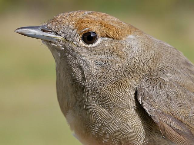 Día-de-las-Aves-02