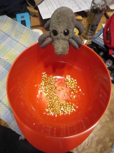 Popcorn Mite