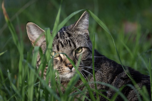 Tabby cats and camo.