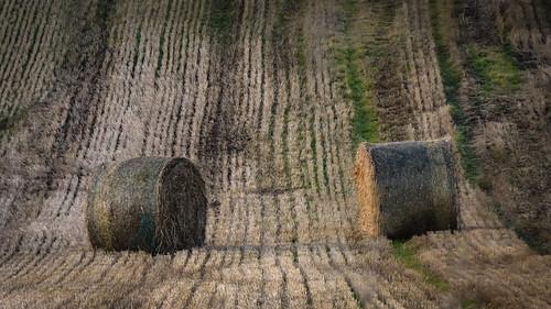 blackisle rosshire cromartyfirth highlands scotland sunset sundown landscape agriculture farm farming fields hay bales stubble pattern rows