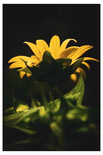 Golden Crown - Chanticleer - Wayne PA_Web 1-E_Scaled