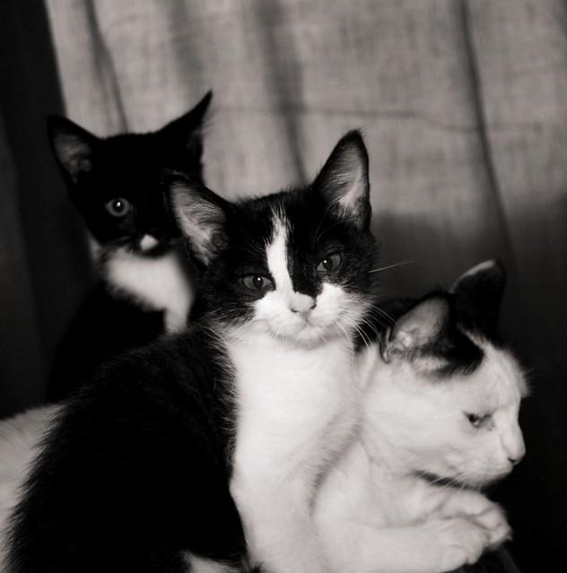 Triple Catness