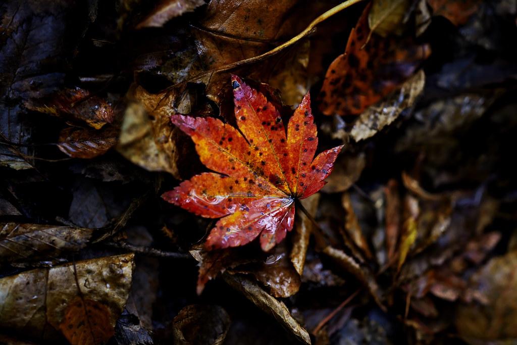 a leaf in autumn
