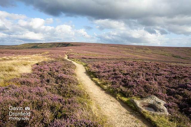 IMG_1601: Cleveland Way track to Round Hill North York Moors Yorkshire UK