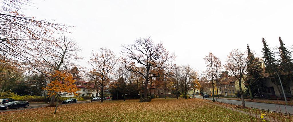 Panorama Dorfaue Lankwitz  23.11.2019
