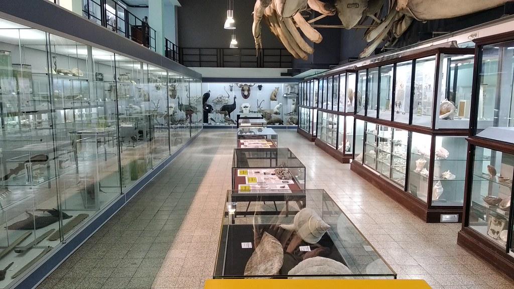 MuseoZoológicoLeuven (7)