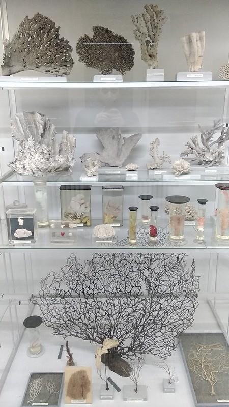 MuseoZoológicoLeuven (1)