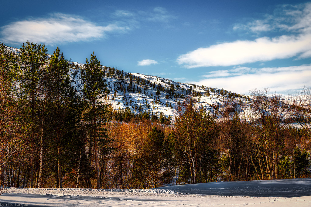 Winter snow covered mountain with trees near Alta, Norway-22a
