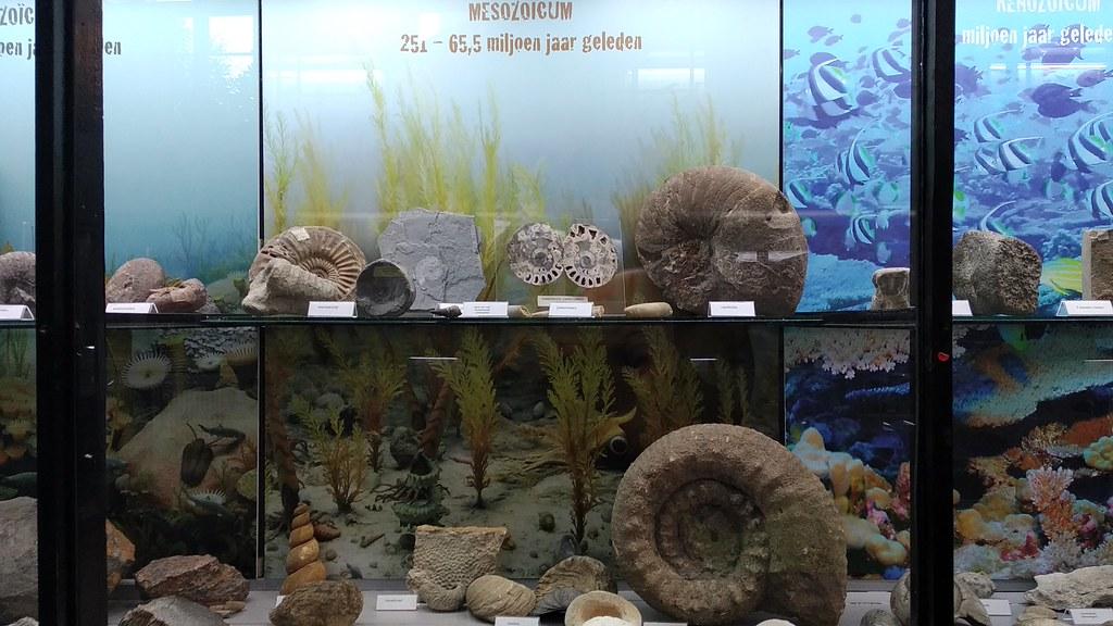 MuseoZoológicoLeuven (4)