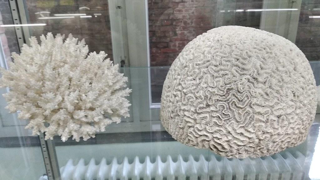 MuseoZoológicoLeuven (3)