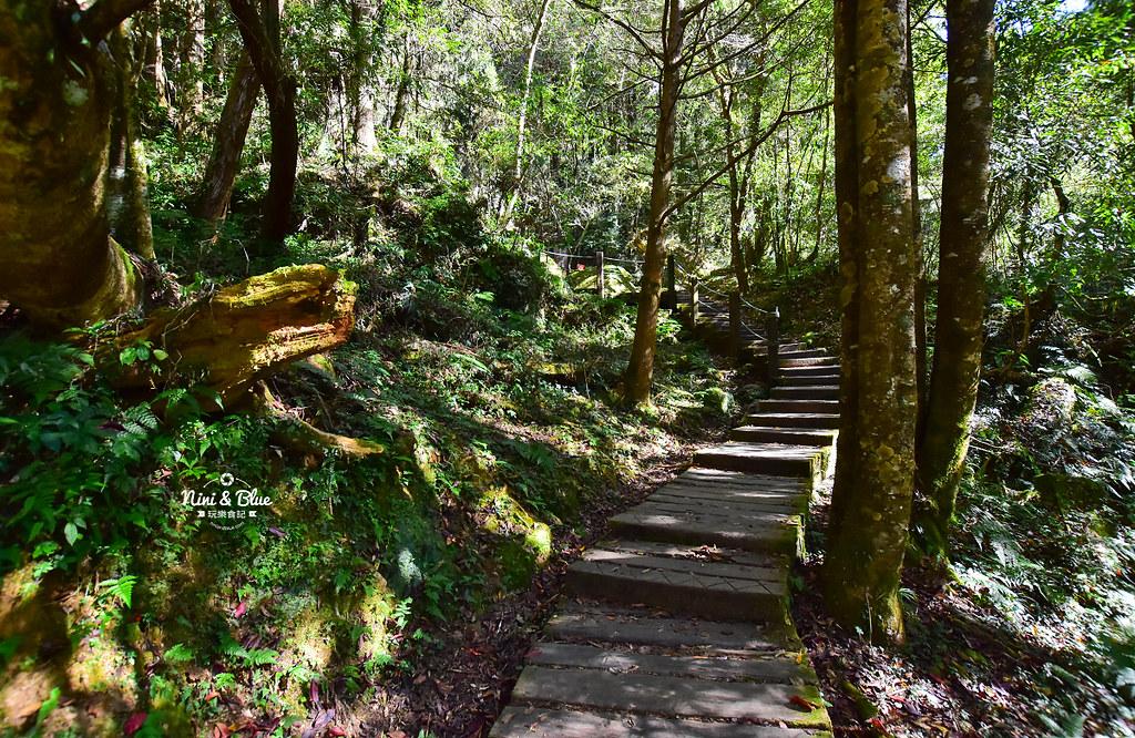 杉林溪 落羽松 水杉 楓葉 門票旅展  南投景點21
