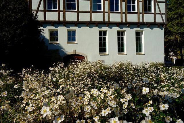 GERMANY Siebenmühlental,  Schlechtenmühle  im Blütenmeer,  76831/12132